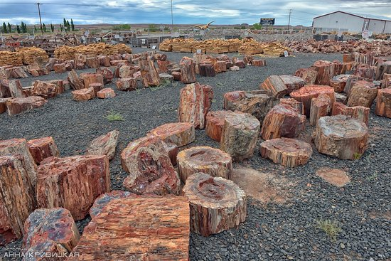 Jim Gray's Petrified Wood Co.