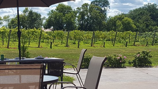 River Falls, WI: Vineyard