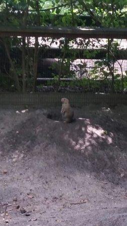 Salisbury Zoo: 20160806_113052_large.jpg