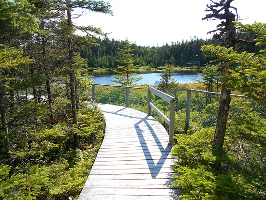 Typical boardwalk at Salmonier Nature Park
