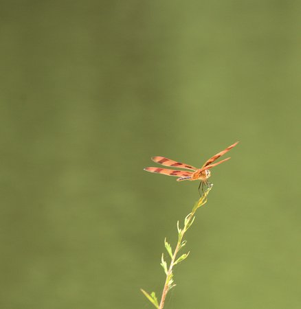 Lancaster, SC: Dragon fly