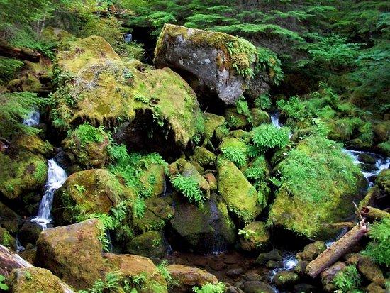 Roseburg, Oregon: Below the Falls