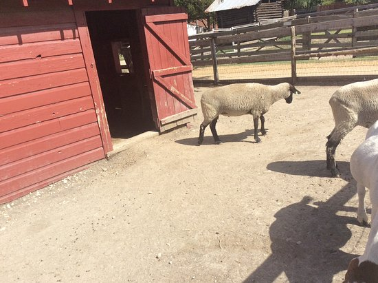 Heritage Farmstead Museum: Barnyard babies