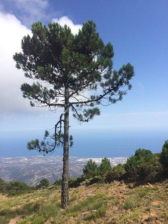 Los Reales de Sierra Bermeja: photo3.jpg