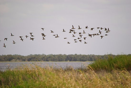 Myakka River State Park: birds over the lake