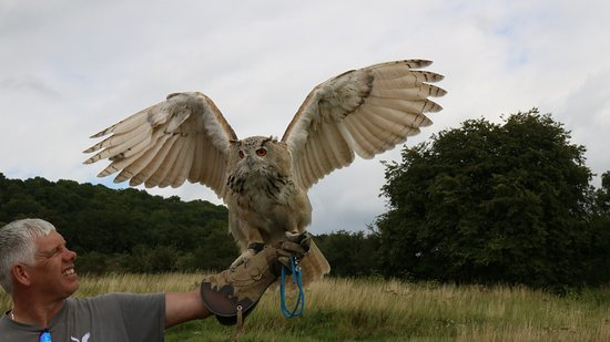 Congresbury, UK: eagle owl