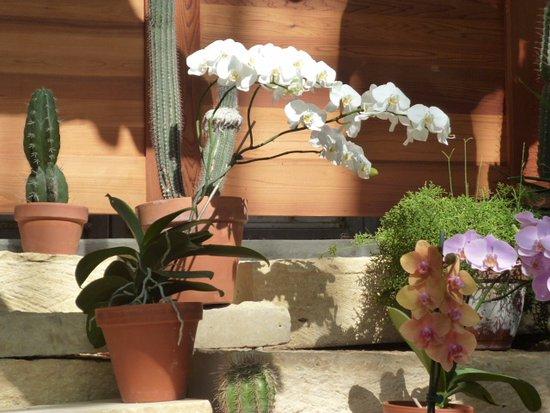 Lauritzen Gardens Omaha's Botanical Center: orchids display