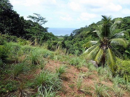 Le Jardin Du Roi Spice Garden : General View