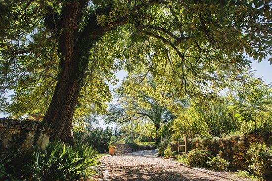 Creysse, Frankrig: jardin