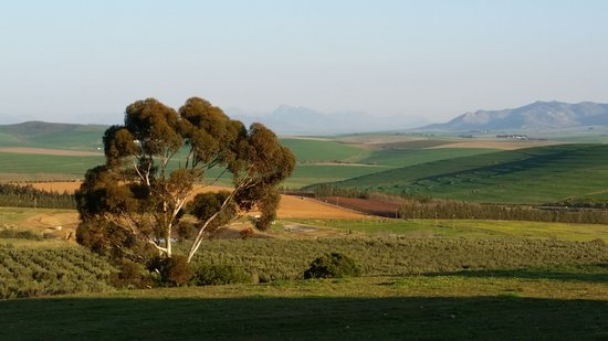 Malmesbury, South Africa: Swartland