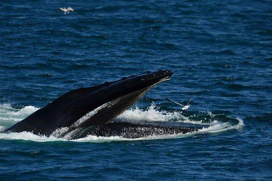 Cape Ann Whale Watch: FB_IMG_1470871828531_large.jpg