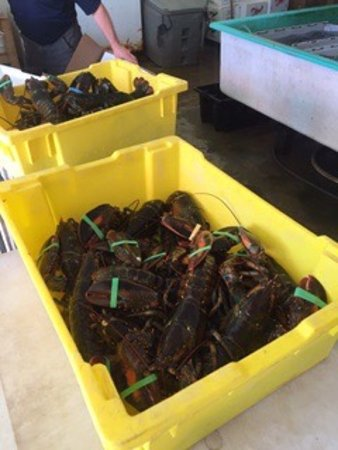 Ryer Lobsters: photo2.jpg