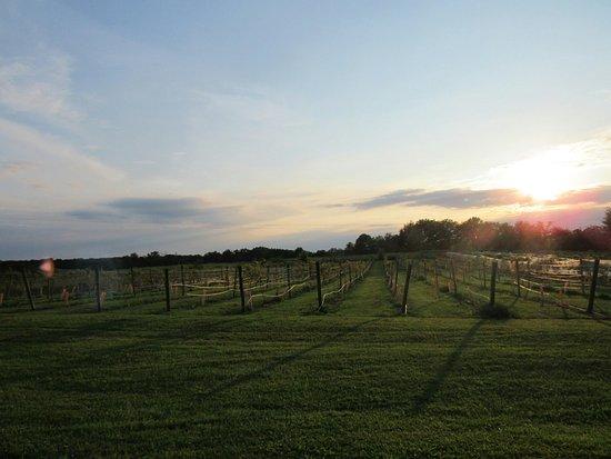 Bloomfield, Kentucky: 20160806070005_large.jpg