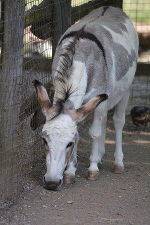 Ridgetown, Canadá: Donkey