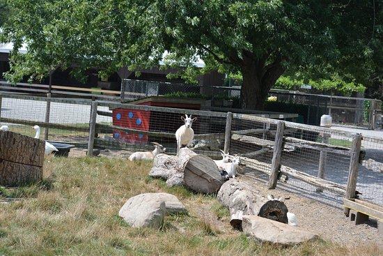Ridgetown, Canadá: Goats
