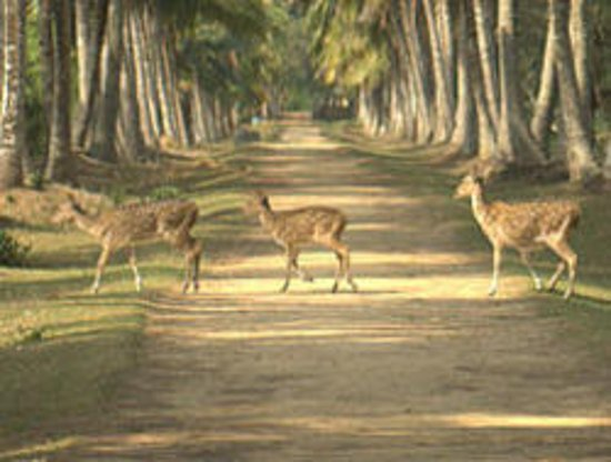 Nandankanan Zoological Park: Deer