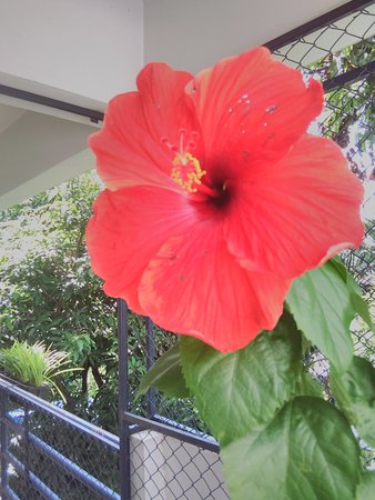 The Chiang Mai White House : flower