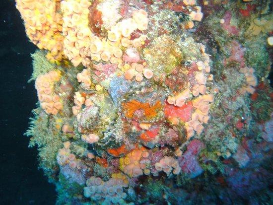 Captain Slate's SCUBA Adventures: Great diving