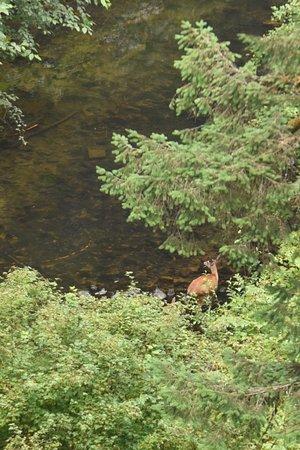Sublimity, OR: Deer!