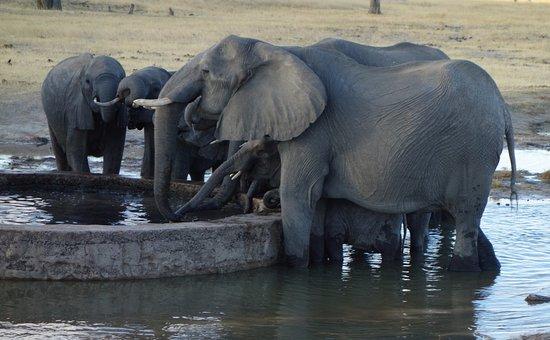 Wilderness Safaris Davison's Camp: Elephants at Watering Hole