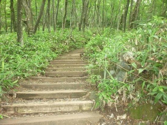 Hallasan National Park: Eorimok Trail