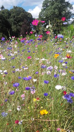 Balleroy, Frankrike: The beautiful display of wild flowers in the gardens of the Chateau