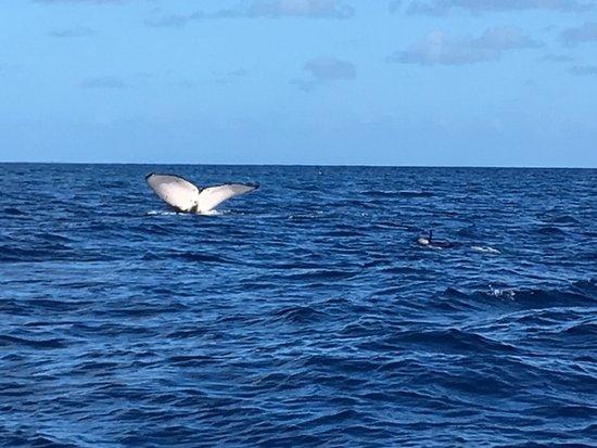 Uoleva Island, Tonga: Whale tail