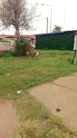 Porto-Novo, Benín: Jardin Place Jean Bayol