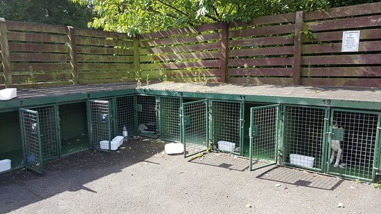 kennels at blair drummond picture of blair drummond safari and