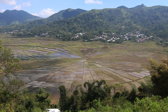 Lingko Spider Web Rice Fields - Walking Tours: spider rise
