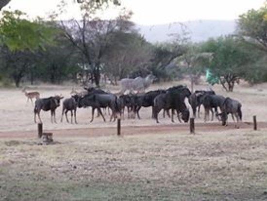 Mabula Private Game Reserve, Afrika Selatan: Animals - Game Drive
