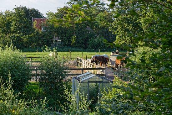 Delfgauw, Nederländerna: Pferde auf der Nachbarweide.