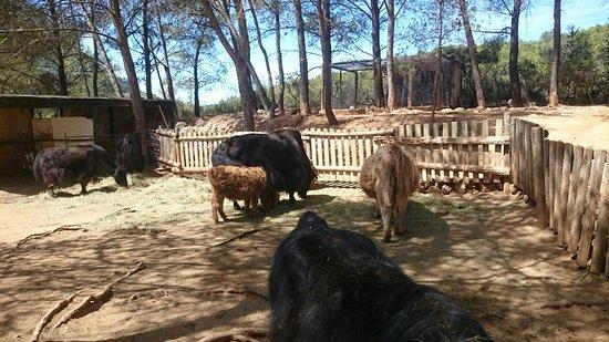 Mini Ferme Zoo