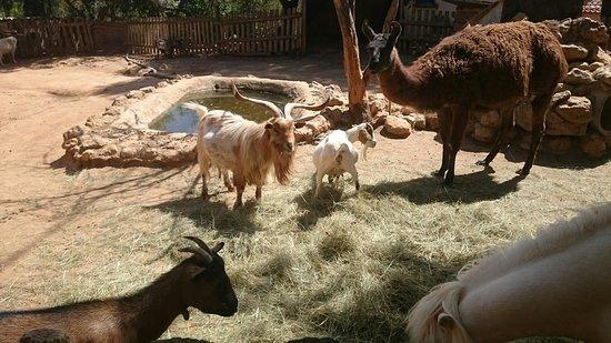 Cessenon-sur-Orb, Prancis: Les animaux de la ferme