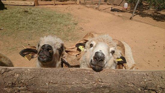 Cessenon-sur-Orb, Frankrike: Les animaux de la ferme