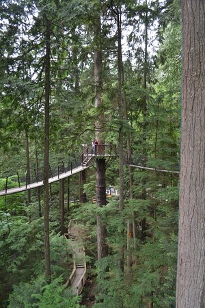 North Vancouver, Canada: in the trees