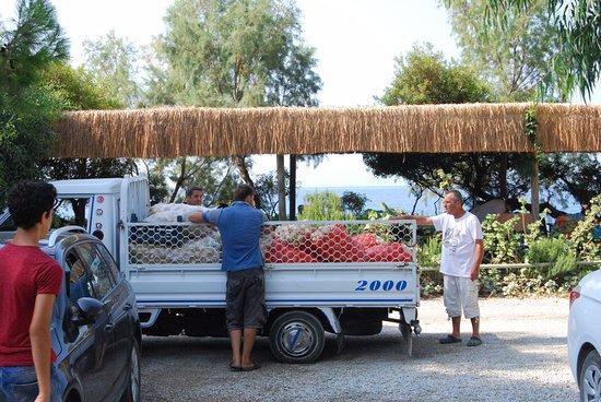 Hoppala Pension: Aardappels te koop!!!