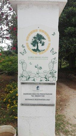 Farfalia - Casa delle Farfalle