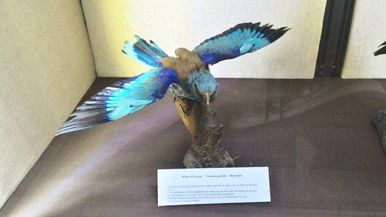 Le Musee d'Histoire Naturelle et d'Ethnographie : P_20160811_112727_HDR_large.jpg