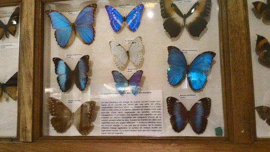Le Musee d'Histoire Naturelle et d'Ethnographie : P_20160811_113523_HDR_large.jpg