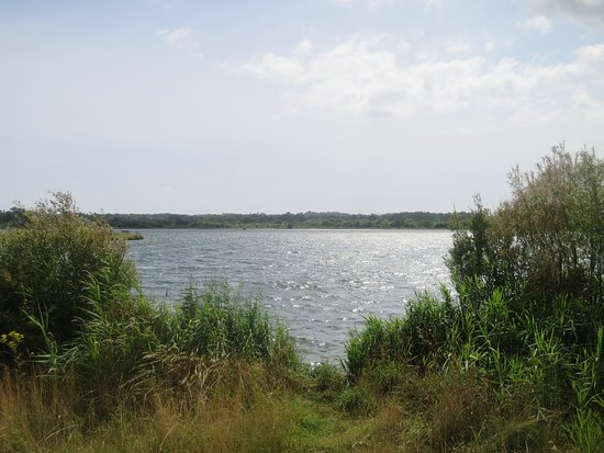Ferndown, UK: View towards Poole across the lake