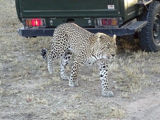 Leopard Hills Private Game Reserve, South Africa: photo0.jpg