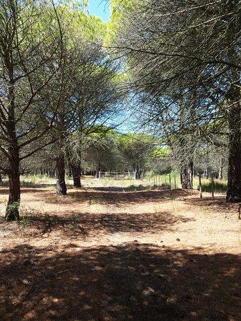 La Cabane du Boucanet