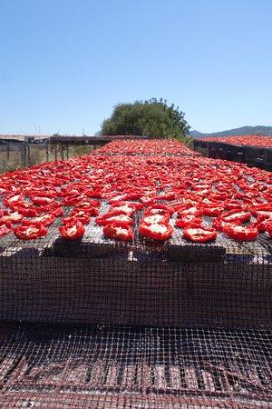 Kritinia, Greece: sun-drying tomatoes at Mylos Cafe, Rhodes. Photo E. Glen