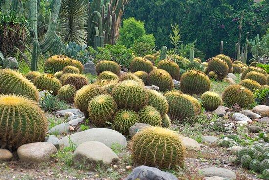 Sarkaria Cactus Garden