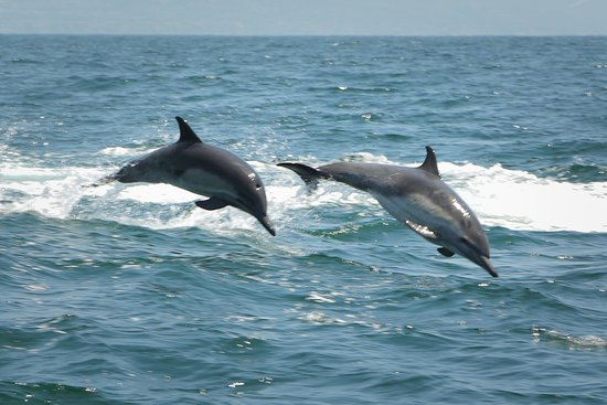 Dana Point, Califórnia: Dolphins from our trip!