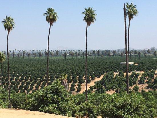 California Citrus State Historic Park: photo8.jpg