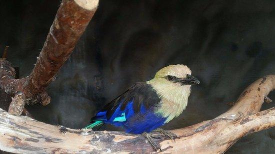 Veldhoven, Países Bajos: Een van de vele vogelsoorten