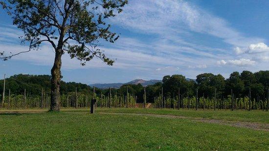 Labico, Италия: P_20160811_102023_large.jpg
