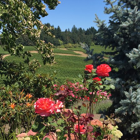 Gaston, OR: view of the vineyard
